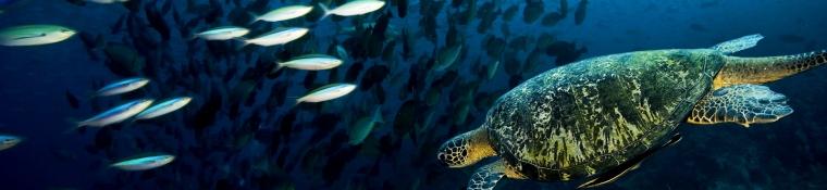 tortuga-junto-a-un-banco-de-peces_editado-1