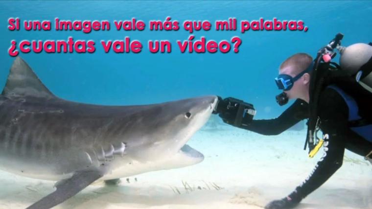 tiburon-devora-camara-buzo